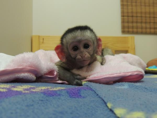 Animal rehabilitation project in South Africa