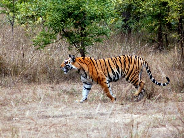 Bhutan tiger safari holiday