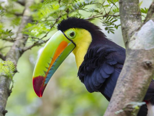 Costa Rica wildlife tour