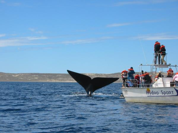 Whale watching tours in Argentina