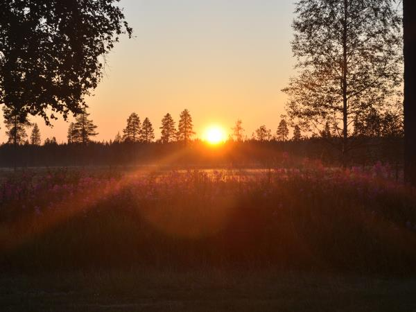 Swedish Lapland summer holiday