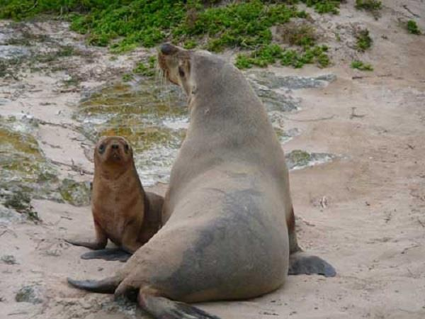 Kangaroo Island nature & wildlife tour, South Australia