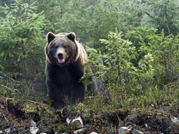 Carpathian Mountains holiday, walking with bears