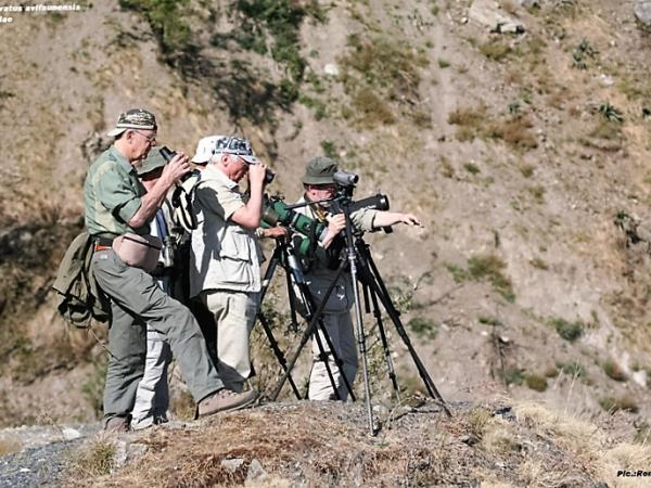 India bird watching holiday in the Himalayas