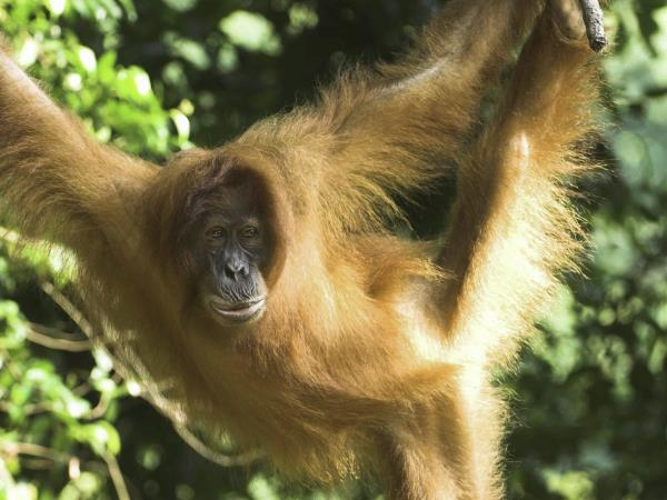 Borneo safari, rainforests, orangutans and beaches
