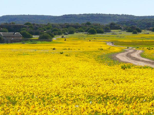 South Africa walking amongst wild flowers holiday