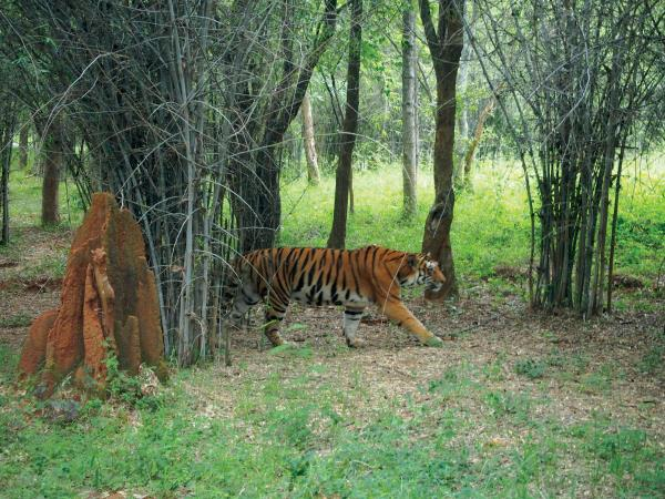 India wildlife and cultural holiday