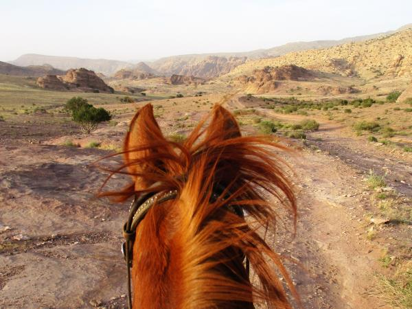 Jordan horse riding holiday