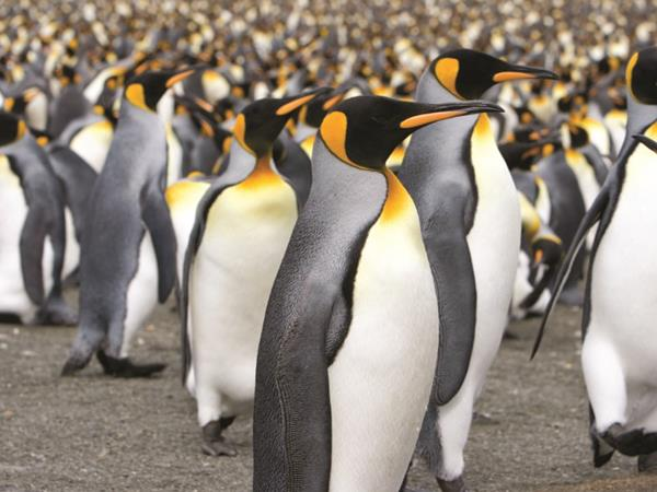 Antarctica Peninsula, Falklands & South Georgia wildlife holiday