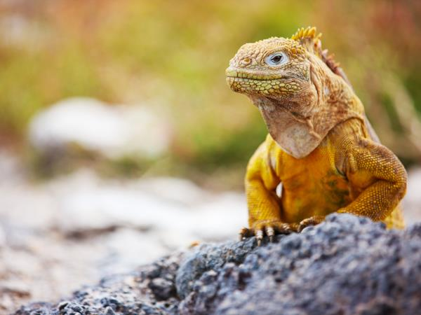 Ecuador & Galapagos holiday, tailor made
