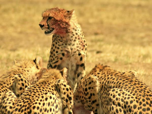 Kenya national parks safari holiday