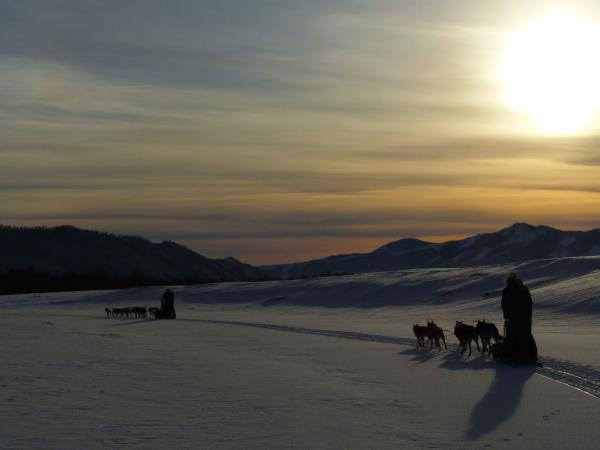 Winter dog sledding tour in Mongolia
