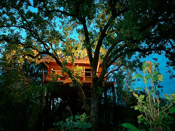 India wildlife holiday with treehouse accommodation