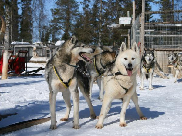 Lapland holiday, Muonio Winter Adventure at Christmas