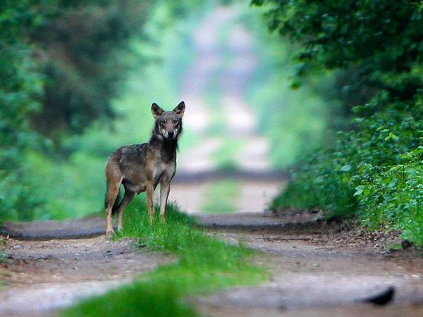 Wildlife holiday in Poland, Summer nature