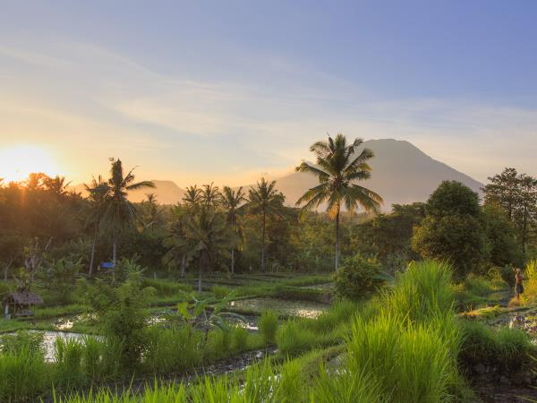 Volunteering in Bali