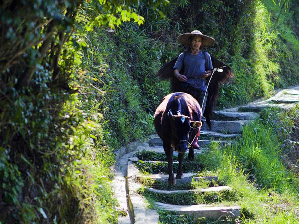 Trekking and cultural tour of China