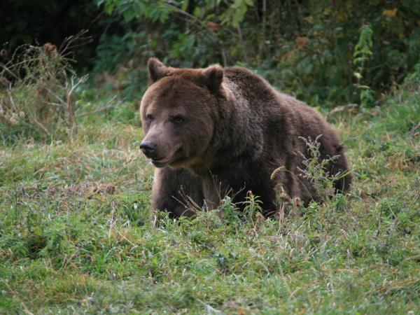 Romania bird watching and bear tracking holiday