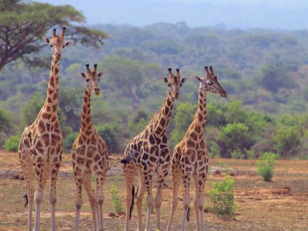 Uganda wildlife and activity holiday
