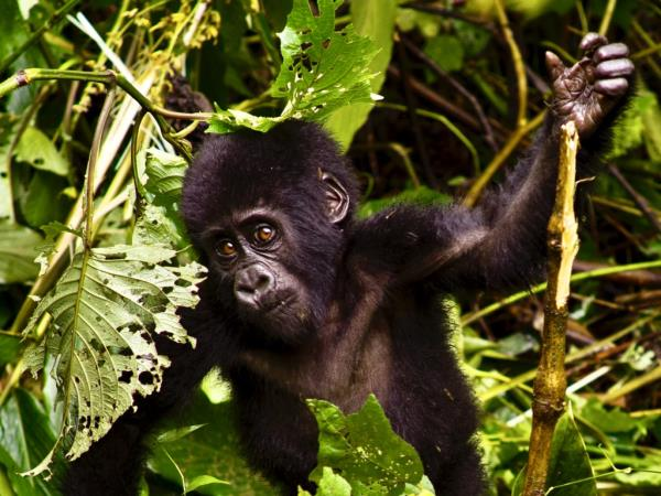 Uganda adventure & volunteering holiday