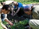 Organic gardening course in Scotland