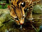 Volunteer with animals in the Amazon rainforest, Ecuador