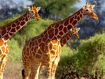 Kenya wildlife adventure holiday
