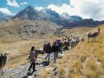 Lares trek in Peru