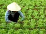 Budget tours to Vietnam