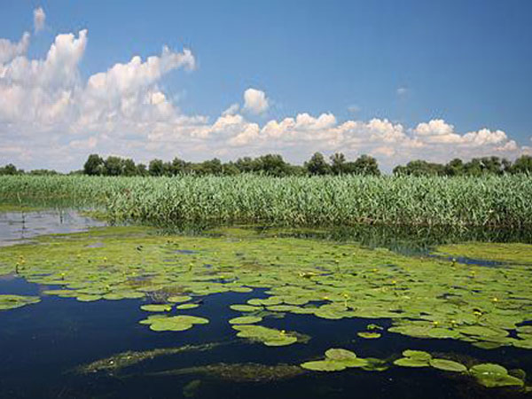 Danube Delta birdwatching holiday in Romania