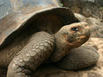 Galapagos Islands and Ecuador tour