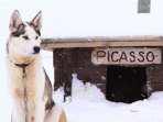 Learn how to mush huskies in Lapland