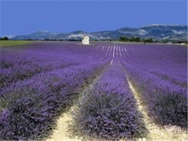 Luberon self guided walking holiday in Provence, France