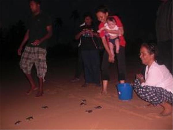Turtle conservation holiday in Sri Lanka