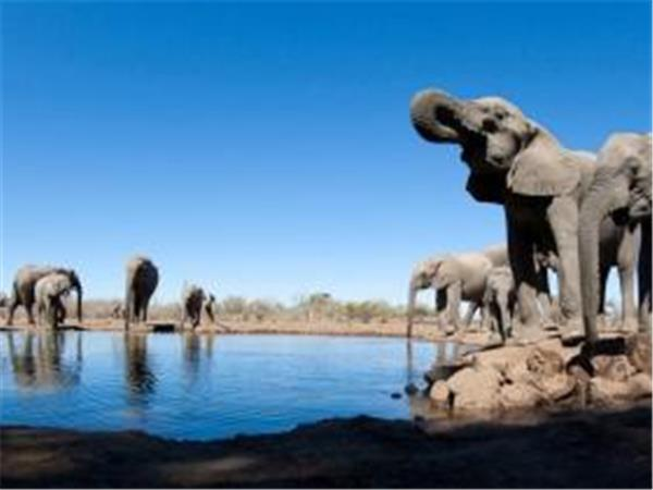 Kenya luxury safari and beach holiday, 10 days