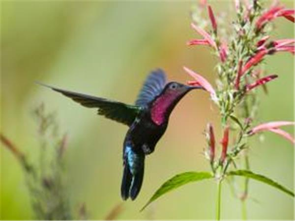 St Lucia birdwatching tour, tailor made