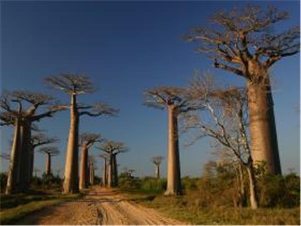 Highlights of Madagascar holiday, tailor made