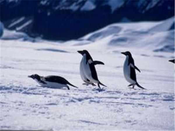 Antarctica expedition cruise