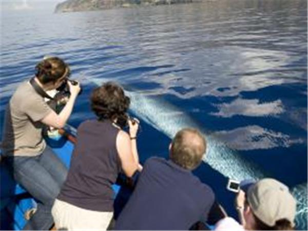 Madeira whale watching and wildlife holiday, Portugal