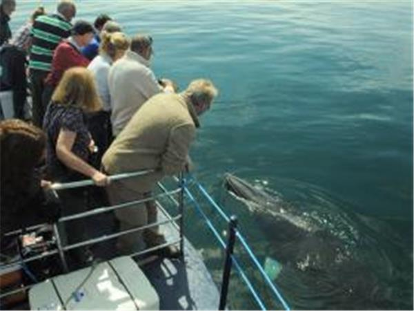 Whale watching cruises, Isle of Mull, Scotland