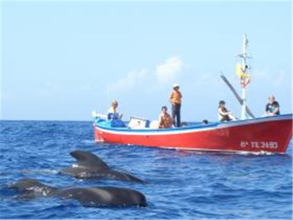 Whale Watching with marine biologist, Canary Islands