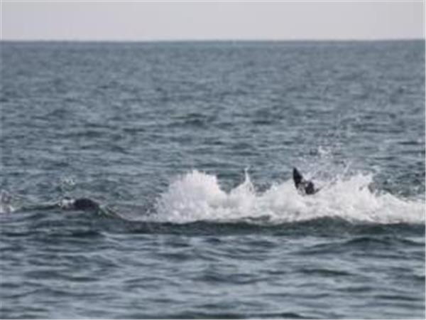 Crystal Coast dolphin watching tour in North Carolina, USA