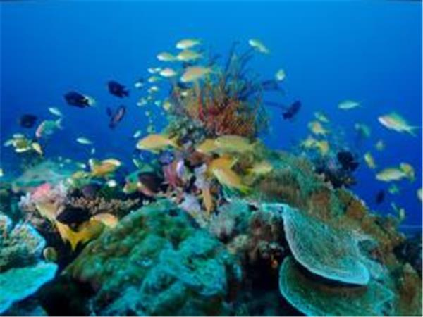 Marine conservation diving holiday in Malapascua, Philippines
