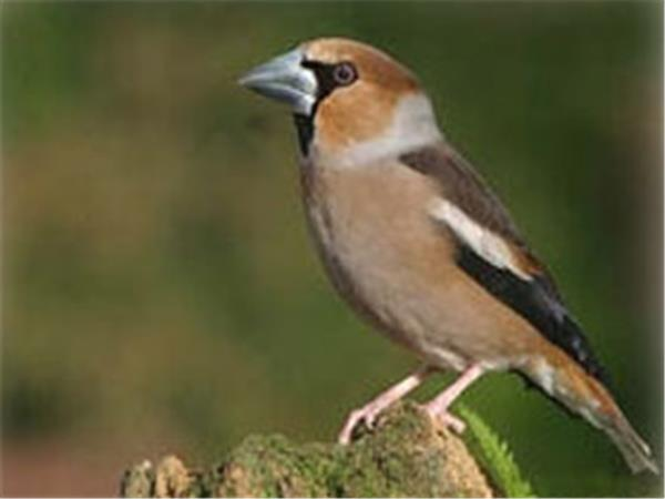 Bird watching tours in Hungary