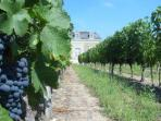 Wine tasting holiday in the Loire Valley