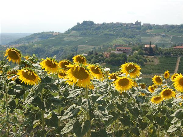 Piedmont cycling holiday, Italy