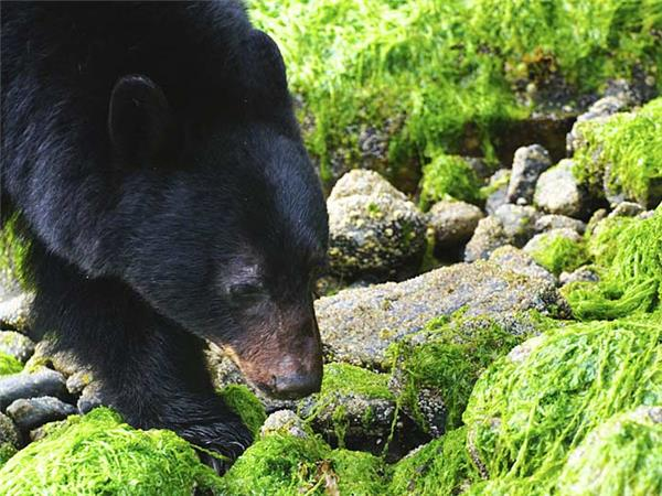 British Columbia wildlife holiday, whales and bears