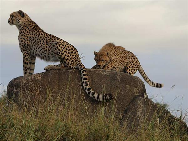 Southern Africa family safari holiday