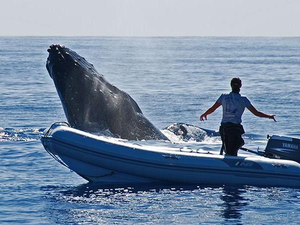 Budget Tonga holiday, swim with humpback whales