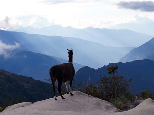 Inca trail & Amazon Rainforest holiday